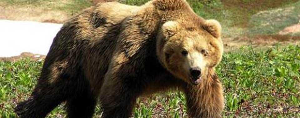 нож со знаком медведя